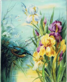 English Iris with Kingfisher